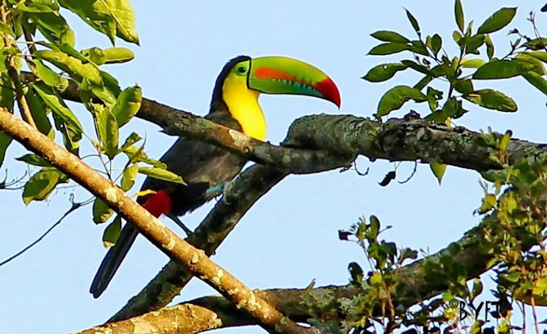 Lote Toucan